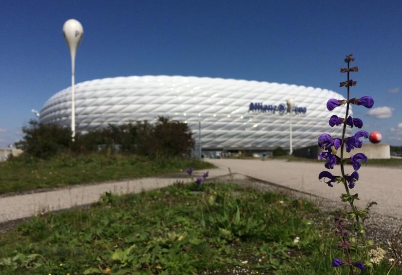In Focus: The AllianzArena